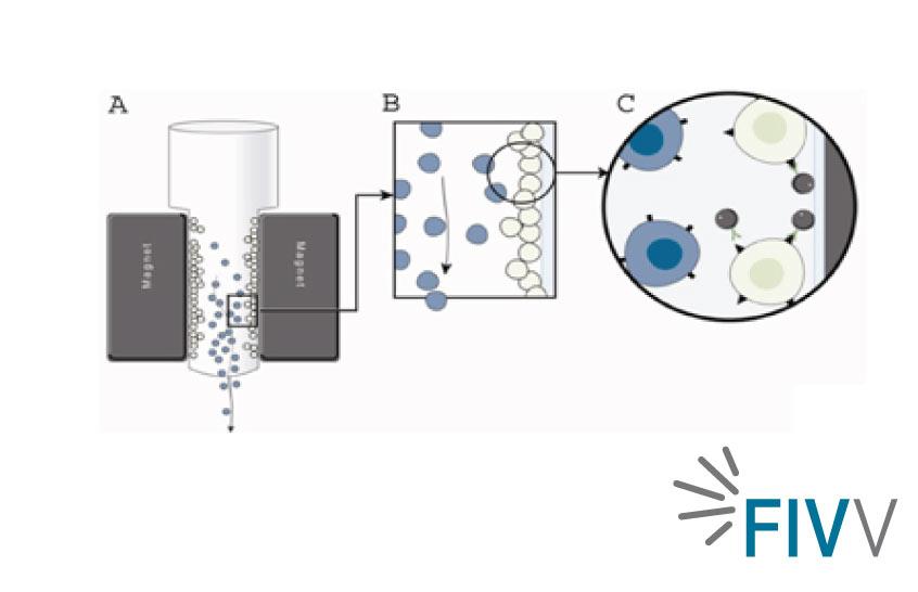 MACS: Tecnología Magnética para seleccionar espermatozoides