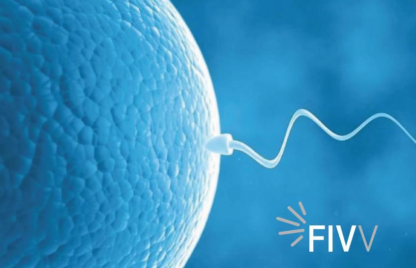 rem tratamientos reproducción asistida